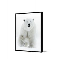 Toile encadré Ours blanc 65 x 92,5 cm, collection My gallery, Pôdevache