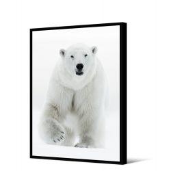 Toile encadré Ours blanc 80 x 120 cm, collection My gallery, Pôdevache