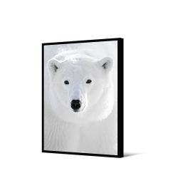 Toile encadré Ours blanc portrait 50 x 70 cm, collection My gallery, Pôdevache