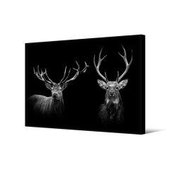 Toile encadré Duo cerf noir et blanc, 80 x 120 cm, collection My gallery, Pôdevache